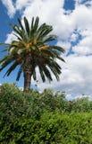 Nuvem tropical da palma no fundo Foto de Stock