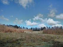 Nuvens bonitas sob a floresta fotografia de stock
