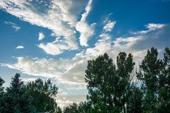 Nuvens brancas acima das árvores imagens de stock royalty free