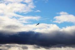 nuvens brancas contra o céu azul, um pássaro e o traço do plano de jato no dia de inverno ensolarado na noite Foto de Stock