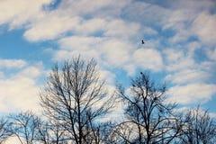 nuvens brancas e árvores desencapadas no parque contra o céu azul em um dia de inverno ensolarado na noite Imagem de Stock