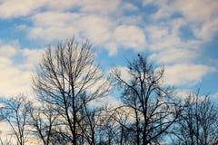 nuvens brancas e árvores desencapadas no parque contra o céu azul em um dia de inverno ensolarado na noite Fotografia de Stock
