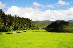 Nuvens brancas, floresta da montanha, pastagem, cenário de Shangri-La Foto de Stock Royalty Free