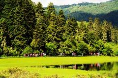 Nuvens brancas, floresta da montanha, pastagem, cenário de Shangri-La Imagem de Stock Royalty Free