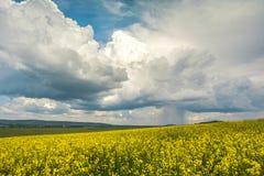 Nuvens chuvosas sobre os campos das violações Fotos de Stock Royalty Free