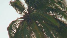 Nuvens cinzentas das palmeiras no céu na praia em Maldivas video estoque