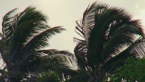 Nuvens cinzentas das palmeiras no céu na praia em Maldivas vídeos de arquivo