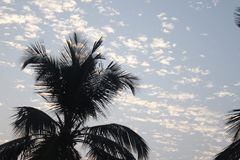 Nuvens com árvore imagem de stock