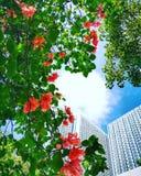 Nuvens, construção e flores foto de stock royalty free