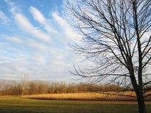 Nuvens da ondinha Fotos de Stock