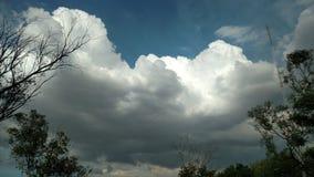 Nuvens das árvores y Fotografia de Stock Royalty Free