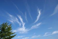 Nuvens de cirro #1 Imagens de Stock