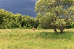 Nuvens de tempestade sobre o prado Imagem de Stock Royalty Free