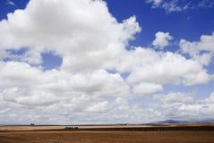 Nuvens de trovão sobre campos de trigo Fotografia de Stock Royalty Free