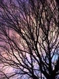 Nuvens do arco-íris através da árvore Foto de Stock Royalty Free