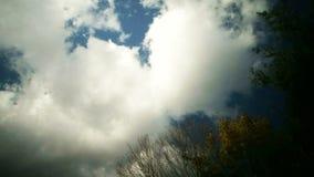 Nuvens do lapso de tempo sobre a árvore vídeos de arquivo