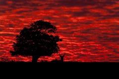 Nuvens dramáticas no nascer do sol Imagens de Stock