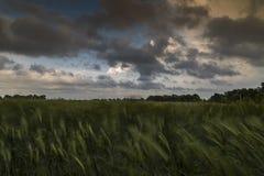 Nuvens dramáticas sobre o campo de trigo Fotografia de Stock Royalty Free
