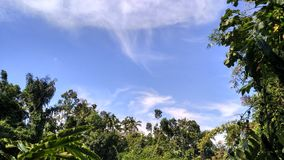 Nuvens e árvores Imagem de Stock