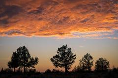 Nuvens e árvores do por do sol foto de stock royalty free