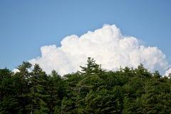 Nuvens e árvores em um dia de verão brilhante Imagem de Stock