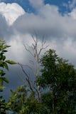Nuvens e árvores secas Fotos de Stock Royalty Free