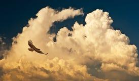 Nuvens e falcão Imagens de Stock