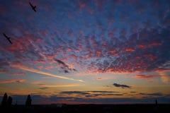 Nuvens e pássaros coloridos no céu no por do sol Foto de Stock
