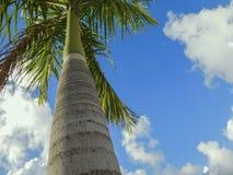 Nuvens e a palmeira Imagens de Stock
