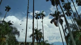Nuvens e pombas imagens de stock