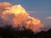 Nuvens e por do sol ou nascer do sol com cacto da silhueta Fotografia de Stock Royalty Free