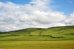 Nuvens e rebanho brancos dos carneiros em prados Foto de Stock Royalty Free