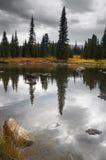 Nuvens e reflexões dos abetos. Fotos de Stock Royalty Free