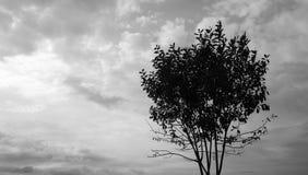 Nuvens e silhueta da árvore Foto de Stock