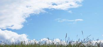 Nuvens em uma grama. imagem de stock