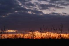 Nuvens, ervas daninhas, e por do sol Imagem de Stock Royalty Free