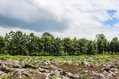 Nuvens escuras do céu do parque exterior de pedra da árvore Fotos de Stock Royalty Free