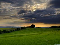 Nuvens espetaculares e luz solar dourada imediatamente antes de um por do sol de meados de-ver?o sobre os campos de trigo de rola fotografia de stock
