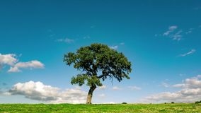 Nuvens macias sobre a árvore só no campo verde video estoque