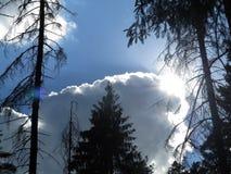 Nuvens na floresta fotografia de stock