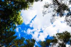 Nuvens no céu e no fundo de ramos de árvore Fotos de Stock