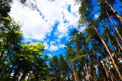 Nuvens no céu e no fundo de ramos de árvore Foto de Stock
