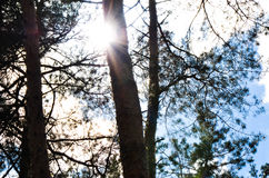 Nuvens no céu e no fundo de ramos de árvore Imagens de Stock Royalty Free