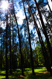 Nuvens no céu e no fundo de ramos de árvore Imagem de Stock
