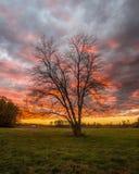 Nuvens pintadas Imagens de Stock Royalty Free