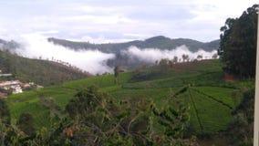 Nuvens que aumentam acima na propriedade do chá Fotos de Stock Royalty Free