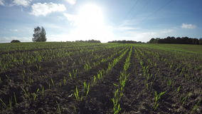 Nuvens que correm sobre o campo de trigo, lapso de tempo 4K vídeos de arquivo