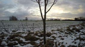 Nuvens que correm sobre o crescimento nevado do campo de trigo, lapso de tempo 4K video estoque