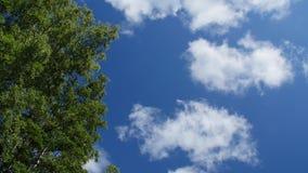 Nuvens que derivam em um dia ensolarado acima dos ramos de árvore vídeos de arquivo