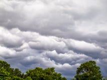 Nuvens sobre árvores Imagem de Stock